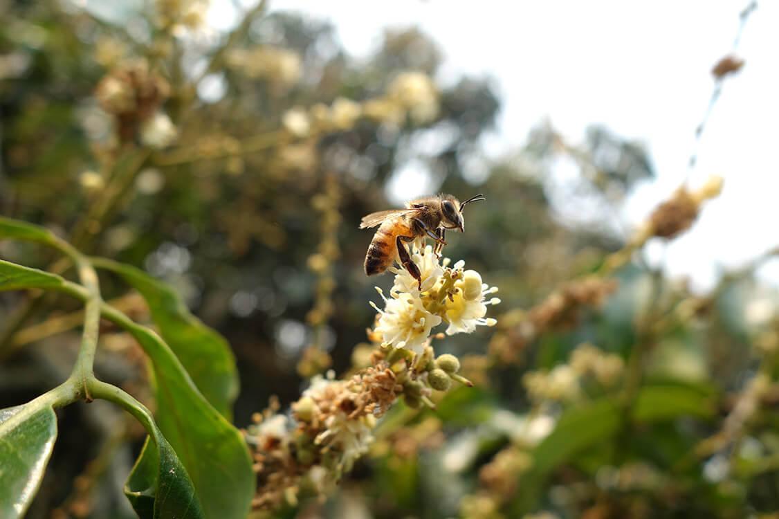 蜜蜂故事館天然環境